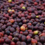 Color de la tierra: La lucha de mujeres por su territorio y su café