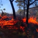 En Jalisco, 9 de cada 10 incendios forestales son provocados